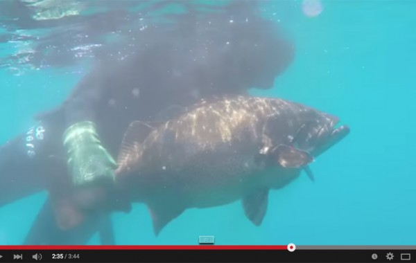Sea Of Cortez Spearfishing Trip May 2015